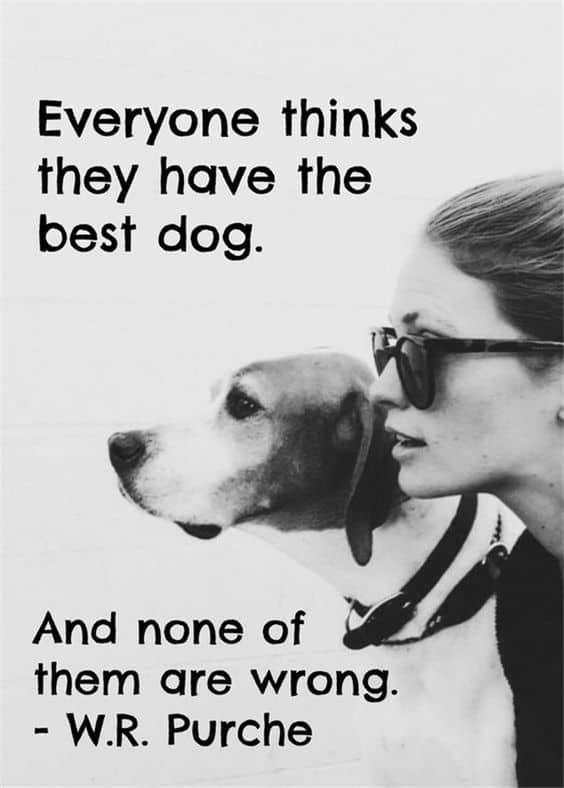 Top 60 Greatest Dog Quotes And Sayings With Images Amazing Quotes About A Girl And Her Dog