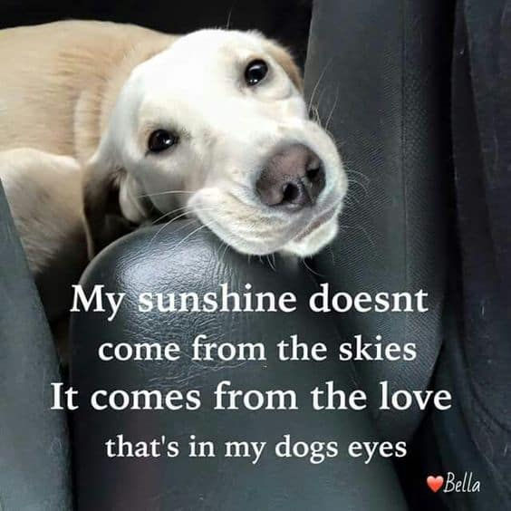 Love My Dog Quotes Classy Top 48 Greatest Dog Quotes And Sayings With Images