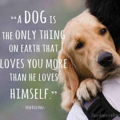 Top 60 Greatest Dog Quotes And Sayings With Images Interesting Quotes About Dogs Love