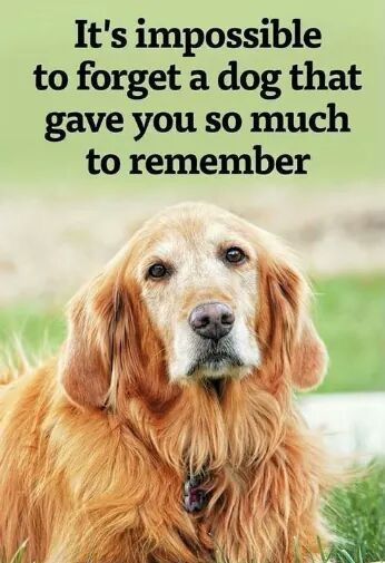 Top 60 Greatest Dog Quotes And Sayings With Images Interesting Quotes About A Girl And Her Dog