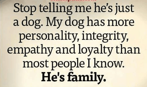 Top 60 Greatest Dog Quotes And Sayings With Images Stunning Quotes About A Girl And Her Dog
