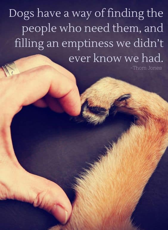 101 Dog Quotes 2021 Update 50greetings.com | malayalam greetings, quotes, pictures, images, messages for facebook, whatsapp. 101 dog quotes 2021 update