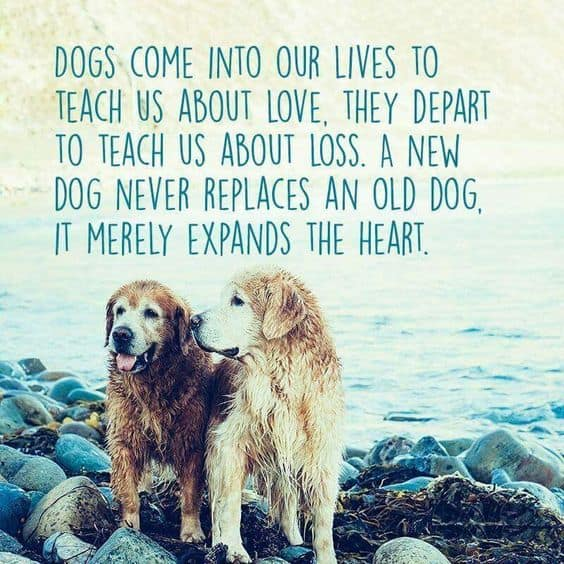 Losing A Dog Quotes Mesmerizing Top 100 Greatest Dog Quotes And Sayings With Images
