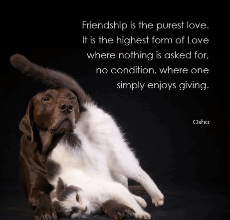 Best 100 Osho Quotes On Life, Love, Happiness