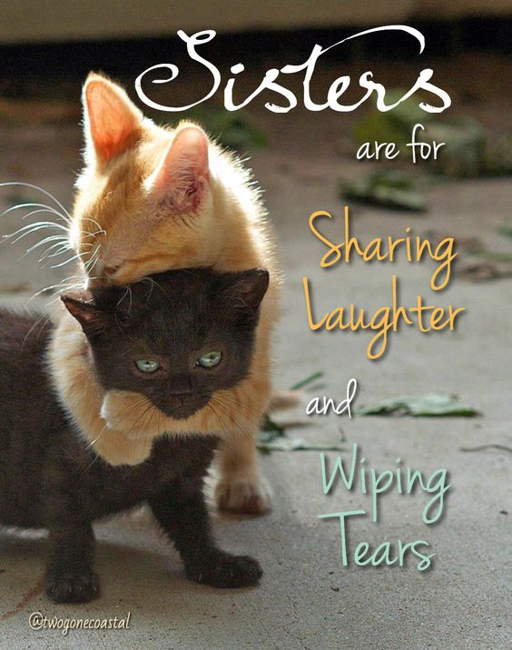 Sister Quotes Laughter Tears