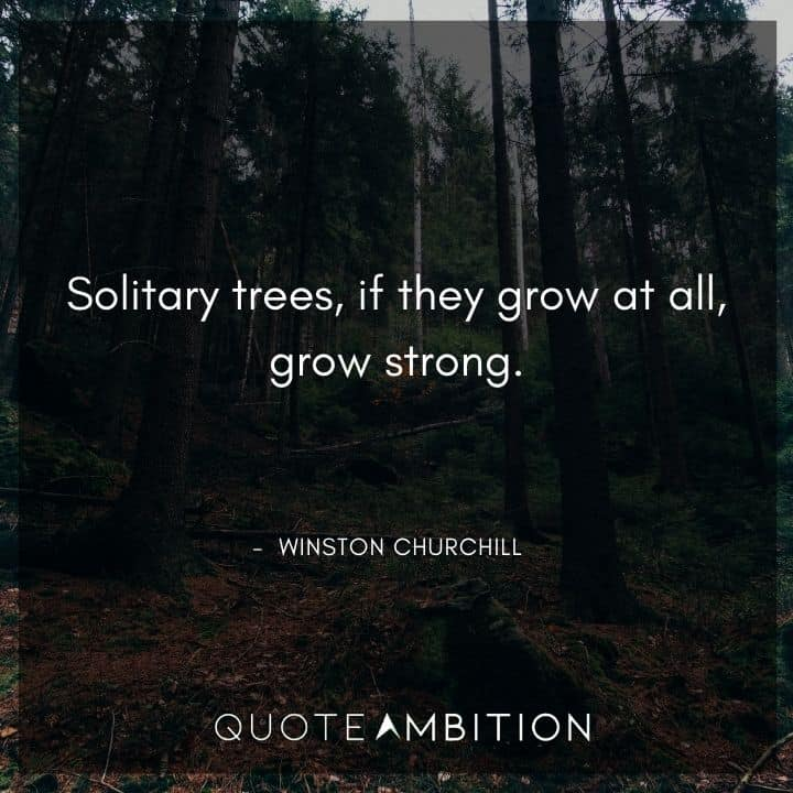 Winston Churchill Quotes - Solitary trees, if they grow at all, grow strong.