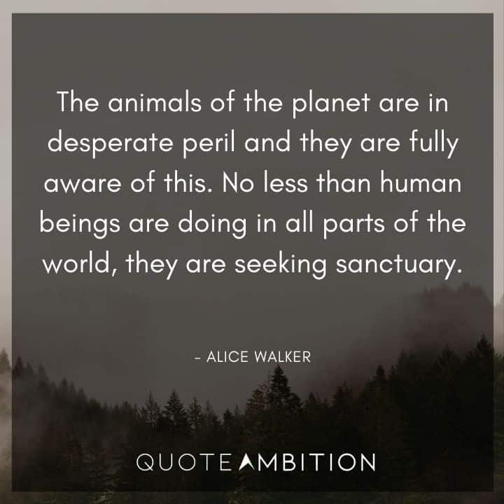 Alice Walker Quote - No less than human beings are doing in all parts of the world, they are seeking sanctuary.