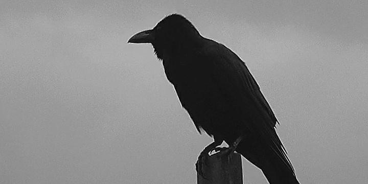 Crow Quotes