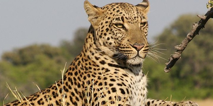 Leopard Quotes