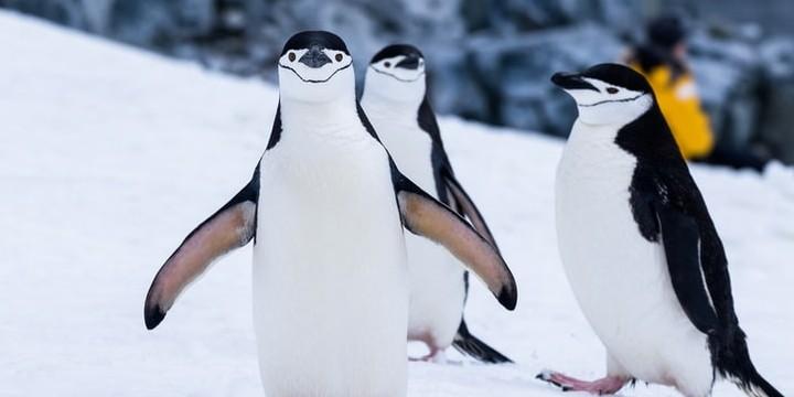 Penguin Quotes