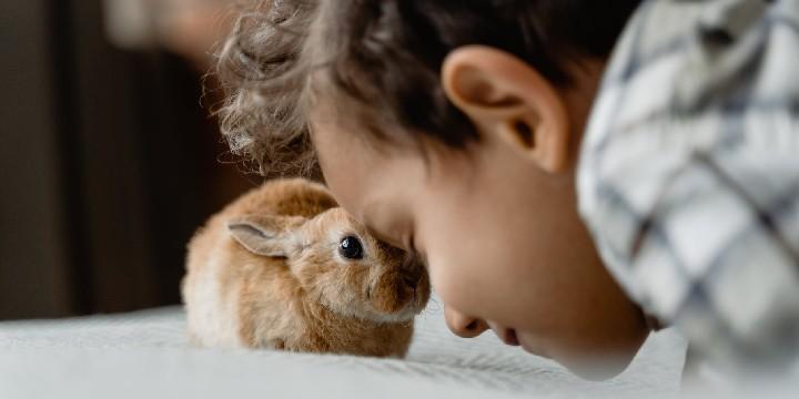 Velveteen Rabbit Quotes
